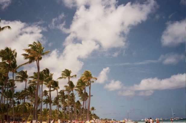 Palmeras caribe