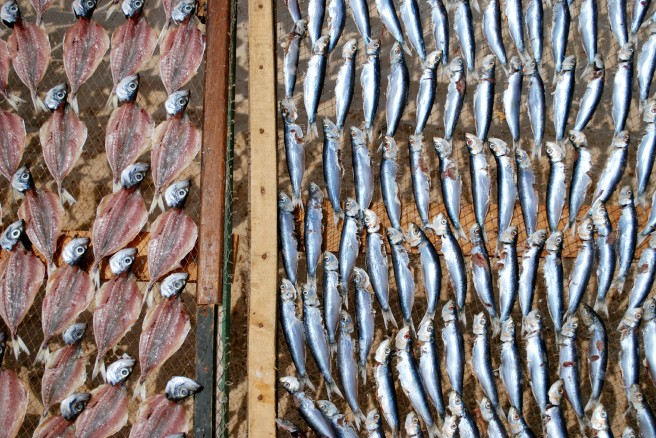 Peixinhos al sol en Nazaré