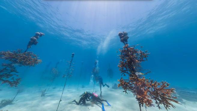 The Coral Nursery, Florida Keys, USA_II